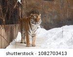 bengal tiger or panthera tigris ... | Shutterstock . vector #1082703413