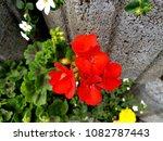 flowers on stones | Shutterstock . vector #1082787443