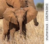 Small photo of african elephant herd