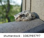 Small photo of Tree Toad on Railing