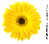 Yellow Daisy Flower Isolated O...