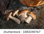 harvested at autumn amazing... | Shutterstock . vector #1083240767