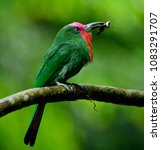 red bearded bee eater ... | Shutterstock . vector #1083291707
