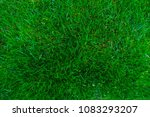 closeup green lawn from top view | Shutterstock . vector #1083293207