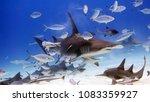 white shark swimming and... | Shutterstock . vector #1083359927