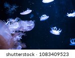 many jelly fish floating in... | Shutterstock . vector #1083409523