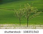 Apfelb    Umchen  Apple Trees