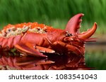 lobster dish in restaurant | Shutterstock . vector #1083541043