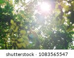 sunlight and fresh green... | Shutterstock . vector #1083565547