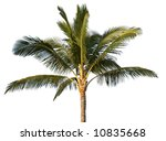 coconut tree isolated  with... | Shutterstock . vector #10835668