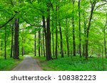 Park tree background - stock photo