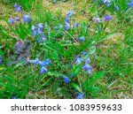 the first spring flowers are... | Shutterstock . vector #1083959633
