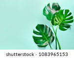Monstera Leaves Summer Minimal Background - Fine Art prints