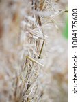 Small photo of Haybale up close abstract