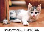 Stock photo curious kitten 108422507