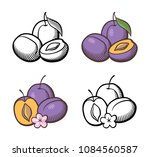 set of plums. ripe fruits with... | Shutterstock .eps vector #1084560587