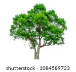 shrubs beautiful bush isolated  ... | Shutterstock . vector #1084589723