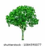 shrubs beautiful bush isolated  ... | Shutterstock . vector #1084590077