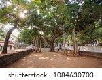 Small photo of Arunachala, Tiruvannamalai / Tamil Nadu / India, January 22, 2018: Buddha tree in the Sri Ramana Maharshi Ashram garden