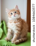 Stock photo lovely red kitten sitting on a green blanket on a windowsill 1084663577