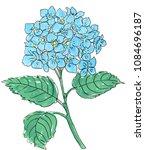 blue hydrangea on a white... | Shutterstock . vector #1084696187