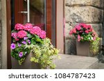 plants and flowers in pots on...   Shutterstock . vector #1084787423