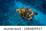 beautiful carapace of a... | Shutterstock . vector #1084809917