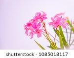 flower background  pink flower... | Shutterstock . vector #1085018117