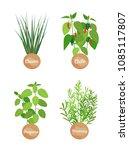 oregano rosemary set of herbs... | Shutterstock .eps vector #1085117807
