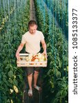 farmer holding a crate of... | Shutterstock . vector #1085133377
