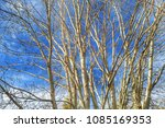 the branches of trees with... | Shutterstock . vector #1085169353