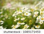 blur floral summer background...   Shutterstock . vector #1085171453