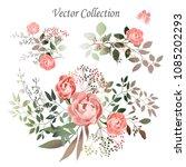vector.  botanical illustration.... | Shutterstock .eps vector #1085202293