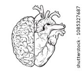 hand drawn line art human brain ... | Shutterstock .eps vector #1085327687
