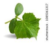 fresh  nutritious  tasty green... | Shutterstock .eps vector #1085361317