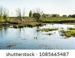 swampy terrain with dry grass, young green trees, power line in the forest, spring sunset time