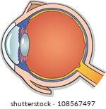Human eye anatomy free vector art 2960 free downloads medical vector illustration of human eye ball cross section ccuart Gallery