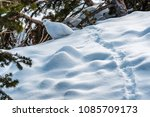 willow ptarmigan in winter... | Shutterstock . vector #1085709173
