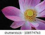 lotus flower on black...   Shutterstock . vector #108574763