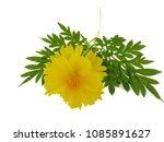 flowers on white background. | Shutterstock . vector #1085891627