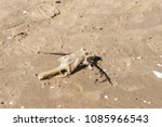 dead fish on the sand beach.... | Shutterstock . vector #1085966543