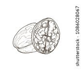 hand drawn nut. vector sketch... | Shutterstock .eps vector #1086028067