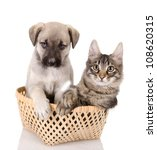 Cat and dog in basket. isolated on white background - stock photo