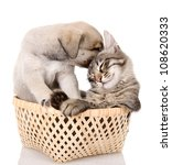 Stock photo puppy caresses a kitten isolated on white background 108620333