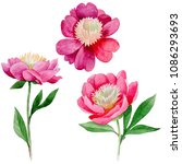 pink peony. floral botanical...   Shutterstock . vector #1086293693