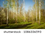 spring and nature awake. glade... | Shutterstock . vector #1086336593