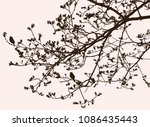 silhouette of branches of a... | Shutterstock .eps vector #1086435443