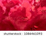 macro shot of the blooming red... | Shutterstock . vector #1086461093