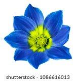 bright blue flower of a dahlia... | Shutterstock . vector #1086616013