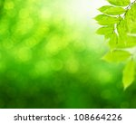 natural green background with green leafs - stock photo